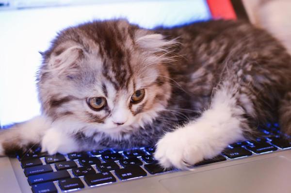 ネコとは関係ない記事です