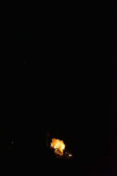 長楽寺のイチョウ