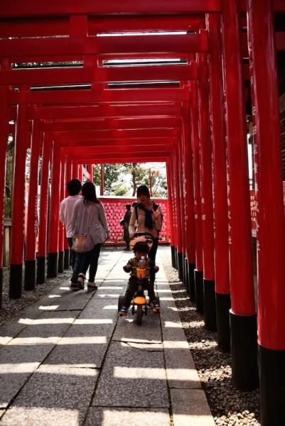 京都は観光したことがない