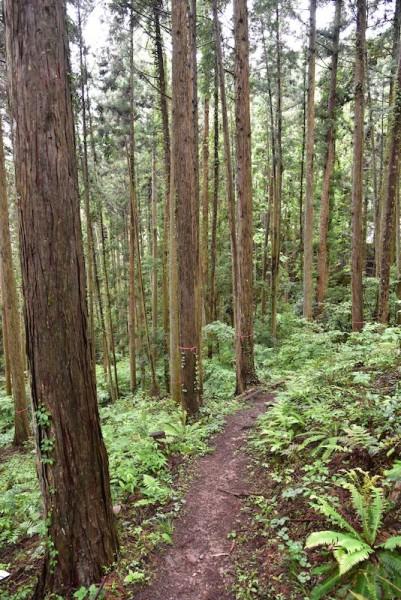 歩きやすいっちゃー歩きやすい山道