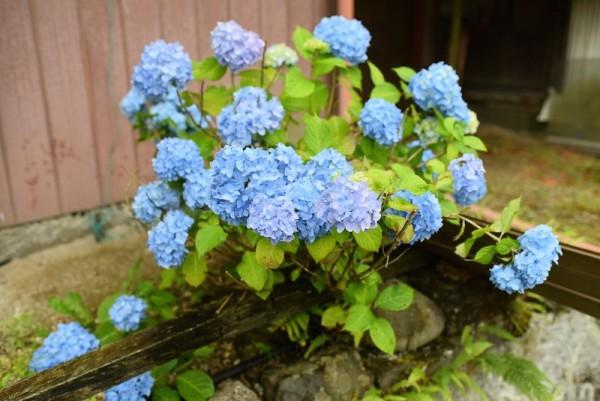 小虫のお写真は微グロいのでお花のお写真をお収めください
