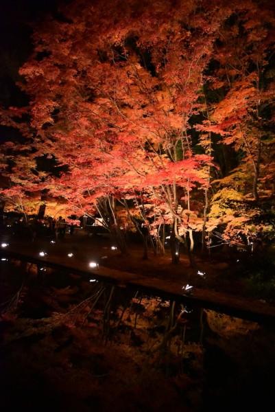 水面に映るもみじがとてもきれいな曽木公園のライトアップ