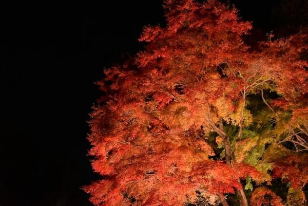 曽木公園のライトアップ