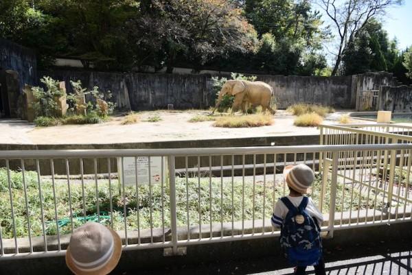 象は泥を浴びてました