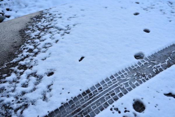 こちらでもそこそこ雪積もりましたの図