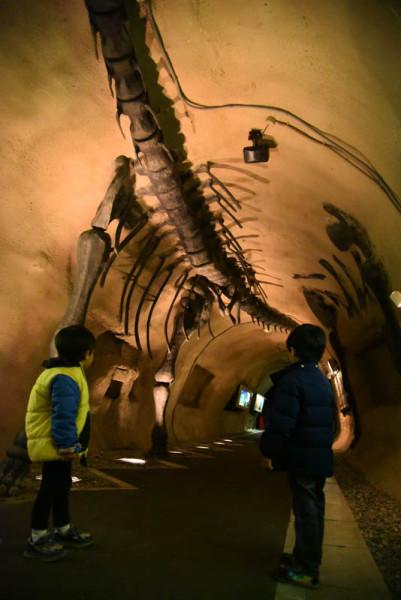 このあたりから恐竜感が出てきて盛り上がり始めました(子どもが)
