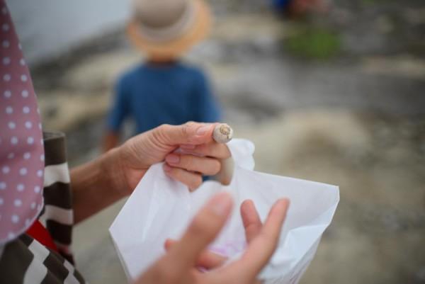 巻き貝の化石を発見の図